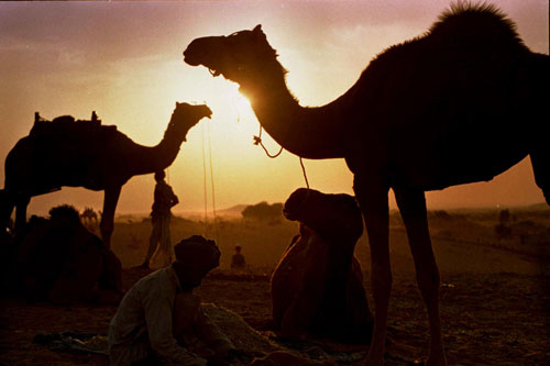 Sunset at Pushkar camel fair