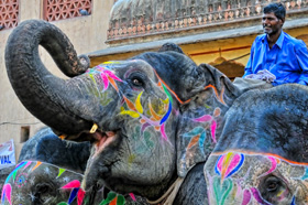 Painted elephant at Jaipur Festival, India